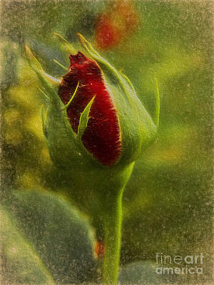 Photograph - Budding Love by Ed Churchill