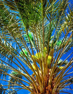Haybales Photograph - Budding Medjool Date Tree by Robert Bales