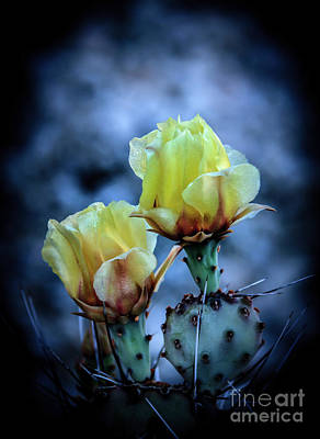 Art Print featuring the photograph Budding Prickly Pear Cactus by Robert Bales
