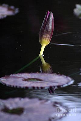 Photograph - Budding Serenity by Alycia Christine