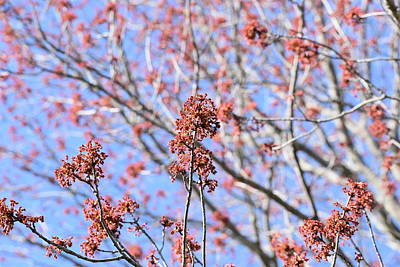 Photograph - Budding Trees 1 by Nina Kindred