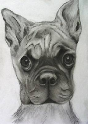 Buddy Boxer Print by Jacquie King