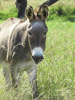 Donkey Digital Art - Buddy by Ella Kaye Dickey