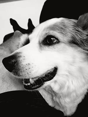 Photograph - Buddy by James