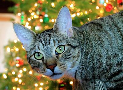 Photograph - Buddy Loves Christmas by Catie Canetti
