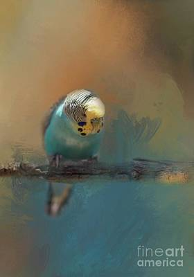 Photograph - Budgie In The Morning Light by Eva Lechner