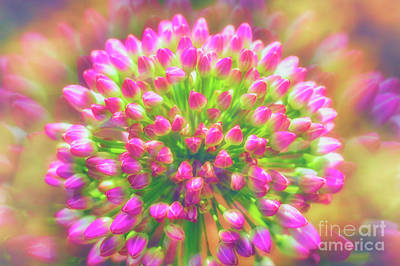 Abstract Flowers Royalty-Free and Rights-Managed Images - Buds by Veikko Suikkanen