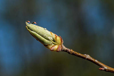 Photograph - Buds With Water Drops by Paul Freidlund