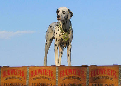 Photograph - Budweiser Dalmatian by Victor Montgomery