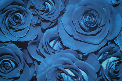 Rosaceae Photograph - Blue Suede Bouquet Of Roses  by SharaLee Art