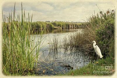 Photograph - Buena Vista Lagoon-snowy Egret by Gabriele Pomykaj