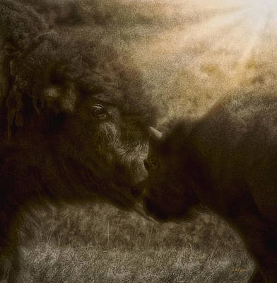 Photograph - Buffalo Love by Amanda Smith