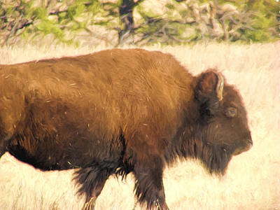 Bison Digital Art - Buffalo 2 by Cathy Anderson