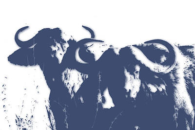 Water Buffalo Wall Art - Photograph - Buffalo 2 by Joe Hamilton