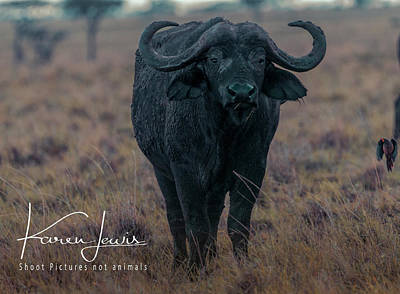 Photograph - Buffalo And Friend by Karen Lewis