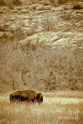 Photograph - Buffalo And Rocks by Robert Frederick