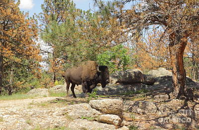 Bison Photograph - Buffalo At Dying Pine by Robert Frederick