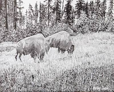 Drawing - Buffalo by Betsy Carlson Cross