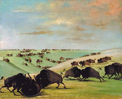 Cowboy Painting - Buffalo Bulls Fighting In Running Season by Celestial Images
