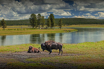 Photograph - Buffalo By Yellowstone River by Randall Nyhof