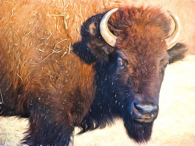 Bison Digital Art - Buffalo  by Cathy Anderson