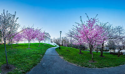 Photograph - Buffalo Cherry Blossoms 1 by Chris Bordeleau