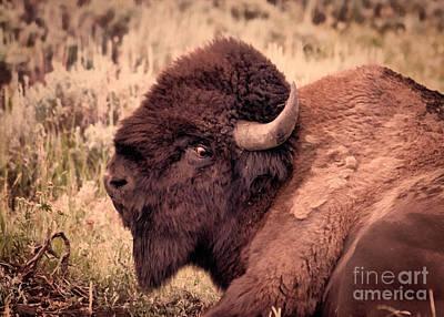 Art Print featuring the photograph Buffalo Eye On You by Janice Rae Pariza