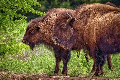 Photograph - Buffalo Friends by Linda Unger