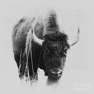 Photograph - Buffalo Gal by Barbara Henry