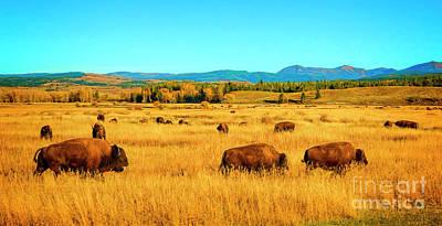 Photograph - Buffalo Gal by Jon Burch Photography