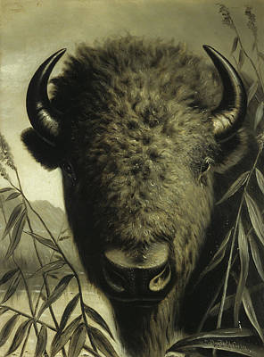 Water Buffalo Wall Art - Painting - Buffalo Head by Astley David Middleton Cooper