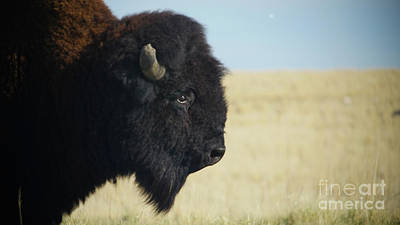 Airplane Paintings - Buffalo Head by Mike Fisher