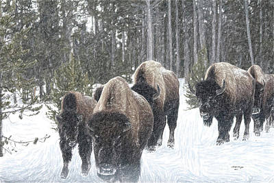 Buffalo Herd Emerges From The Snowy Yellowstone Mist Art Print