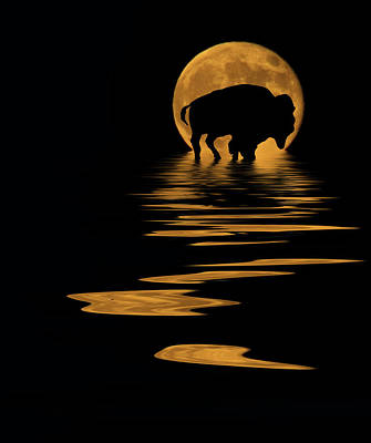 Reflection Photograph - Buffalo In The Moonlight by Shane Bechler