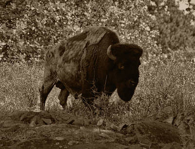 Photograph - Buffalo Junction by B Wayne Mullins