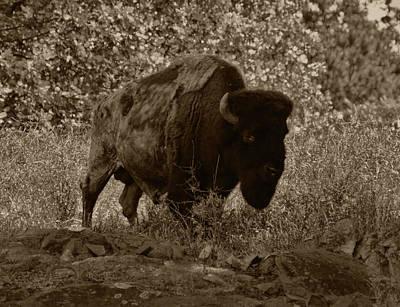 Photograph - Buffalo Junction by B Wayne Mullins