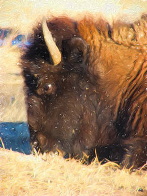 Bison Digital Art - Buffalo Lazy Eating by Cathy Anderson