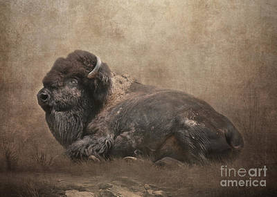 Digital Art - Buffalo by Lynn Jackson