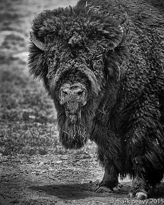 Photograph - Buffalo by Mark Peavy