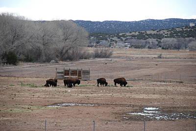 Photograph - Buffalo New Mexico by Rob Hans