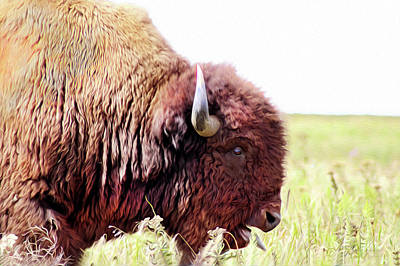 Digital Art - Buffalo Of The Tall Grass Prairie  by Susan Vineyard