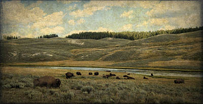 Photograph - Buffalo On The Prairie by Sandra Selle Rodriguez