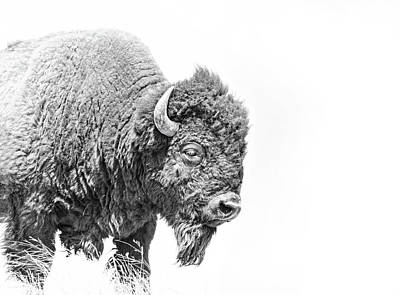 Photograph - Buffalo Portrait Black And White by Jennie Marie Schell