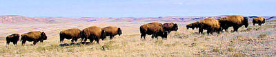 Photograph - Buffalo Range In Kansas by Cheryl Poland