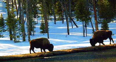 Photograph - Buffalo Roam In Winter by C Sitton