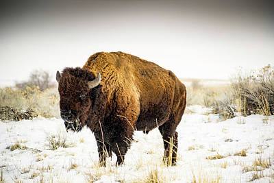 Buffalo Photograph - Buffalo Soldier by Peter Irwindale