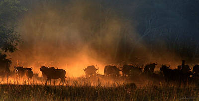 Photograph - Buffalo Stampede by Joseph G Holland