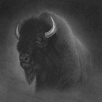 Bison Drawing - Buffalo by Tim Dangaran