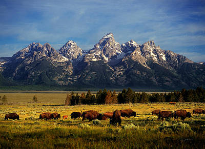 Buffalo Under Tetons Print by Leland D Howard
