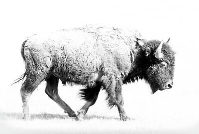 Photograph - Buffalo Walk by Athena Mckinzie